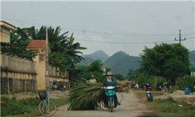 Kiên Giang: Người dân lo mất Tết vì chuối, mía
