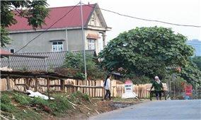 Trồng rừng kinh tế và chế biến lâm sản: Lợi thế phát triển của Yên Bái