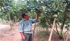 Khi nông dân mạnh dạn thay đổi để phát triển