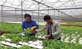 """Tình trạng """"giải cứu"""" trong lĩnh vực nông nghiệp: Góc nhìn từ chính sách"""