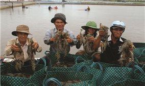 Cà Mau: Nhiều mô hình thúc đẩy phát triển ngành tôm