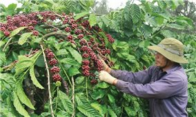 Phát triển cà phê đặc sản: Hướng đi tất yếu để nâng tầm cà phê Việt