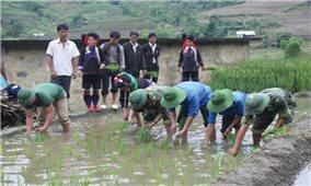 Đoàn Kinh tế - Quốc phòng 356 (Lai Châu): Giúp dân phát triển kinh tế