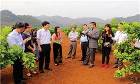 Phát triển chuỗi giá trị trong sản xuất nông nghiệp