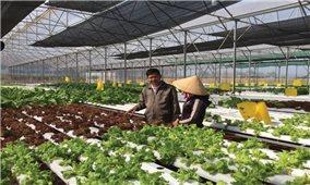 Phát triển nông nghiệp công nghệ cao ở Cư M'gar