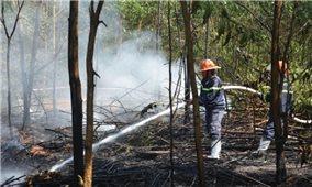 Miền Trung đối mặt với nguy cơ cháy rừng