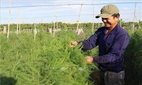Ninh Thuận đa dạng hóa cây trồng thích ứng với biến đổi khí hậu
