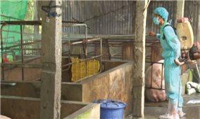 """Đồng bằng sông Cửu Long: """"Gồng mình"""" giữ đàn lợn sạch"""