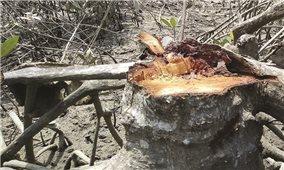 Quảng Trị: Báo động nạn chặt phá rừng phòng hộ