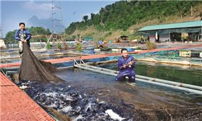 """Nuôi trồng thủy sản: """"Bàn đạp"""" giảm nghèo tại Tuyên Quang"""