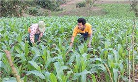 Các huyện miền núi Thừa Thiên-Huế hỗ trợ vùng đặc biệt khó khăn xây dựng nông thôn mới