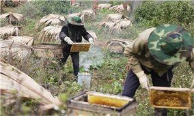 Hà Giang phát huy thế mạnh nông sản chủ lực