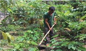 Già làng A Khunh làm kinh tế giỏi