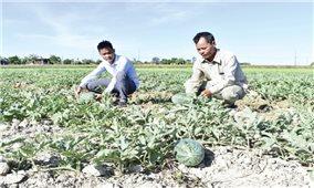 Quảng Trị: Chuyển đổi cây trồng chống hạn