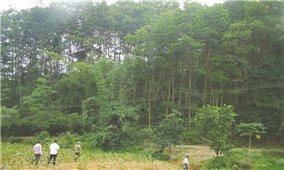 Hà Giang: Lợi ích kép từ hỗ trợ phát triển rừng