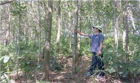Lợi ích kép từ trồng rừng gỗ lớn