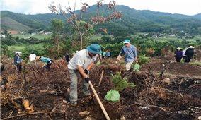 Mô hình cộng đồng bảo vệ rừng và phát triển sinh kế: Những tín hiệu khả quan