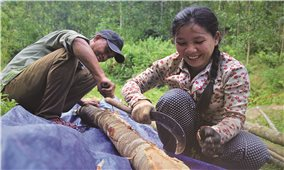 Tinh thần hiếu học của chị Hồ Thị Vang