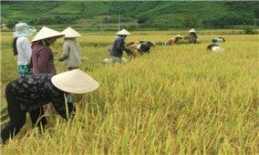 Phú Yên: Nâng cao đời sống người dân từ các mô hình sản xuất mới