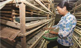 Lâm Đồng: Triển khai hiệu quả tín dụng chính sách đối với đồng bào DTTS