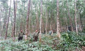 Thực hiện chi trả dịch vụ môi trường rừng ở Bình Định: Người dân hưởng lợi- rừng được bảo vệ