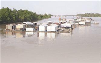 Nông nghiệp Bến Tre: Nguy cơ thiệt hại lớn vì xâm nhập mặn