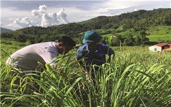 Chuyển đổi cơ cấu cây trồng, vật nuôi để thoát nghèo