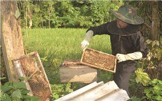 Bí quyết nghề nuôi ong mật ở Tấu Lìn