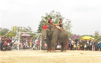 Mùa Xuân Tây Nguyên rộn ràng hội đua voi