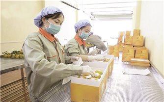 Nông dân Cao Phong tăng lợi nhuận nhờ sản phẩm sạch