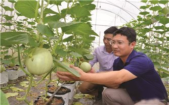 Xây dựng nông thôn mới ở Con Cuông