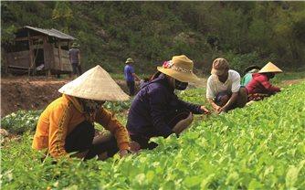 Kỳ Sơn (Nghệ An): Chuẩn bị thực phẩm đón học sinh trở lại trường