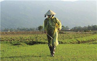 Thừa Thiên - Huế: Báo động nông dân lạm dụng các loại thuốc diệt cỏ