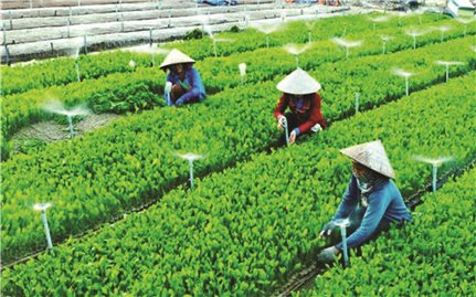 Hội Nông dân với sự phát triển nông nghiệp, nông thôn