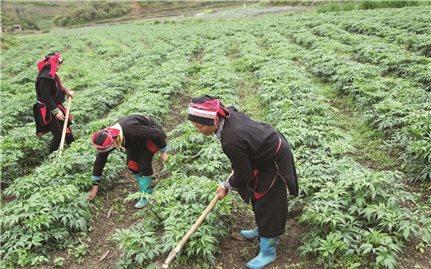 Phát triển nông nghiệp thích ứng với biến đổi khí hậu vùng DTTS: Cần xây dựng những mô hình phù hợp
