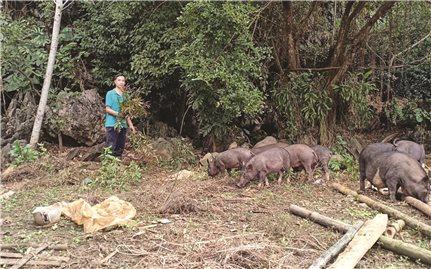 Hòa Bình: Khởi nghiệp từ nông sản sạch