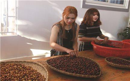 """Cô gái Cơ-ho làm thương hiệu """"K'ho Coffee"""""""