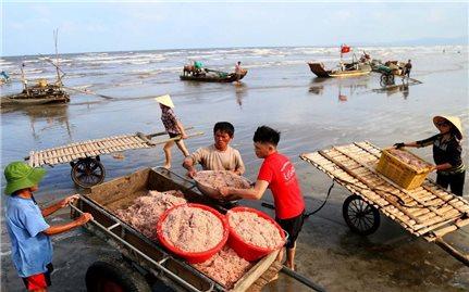 """Ngư dân Nghệ An đón mùa """"lộc biển"""""""