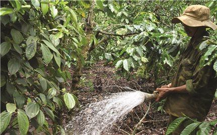 Mô hình tránh hạn hiệu quả của nông dân Tây Nguyên