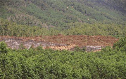 Nan giải quản lý rừng giáp ranh