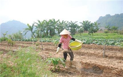 Khi doanh nhân làm nông nghiệp