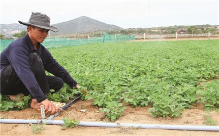 Ninh Thuận: Nhiều mô hình sản xuất hiệu quả nhờ ứng dụng khoa học kỹ thuật