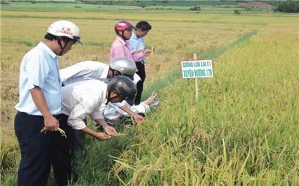 Làm nông nghiệp sạch ở miền núi Phú Yên