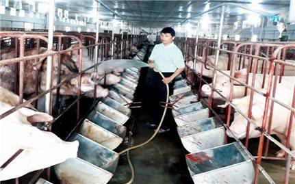 Một nông dân người Cao Lan có doanh thu 14 tỷ đồng/năm