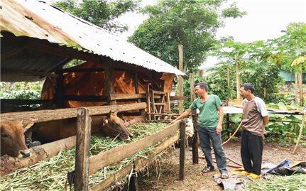 Hoàn thành tiêu chí môi trường ở Ia Bòong: Hành trình gần 10 năm