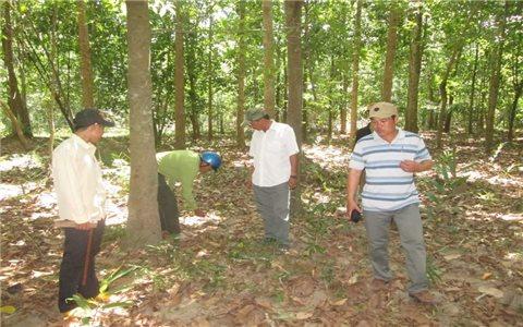 Bình Định: Chậm cấp sổ đỏ đất rừng cho các hộ DTTS nghèo