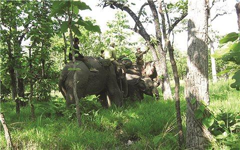 Để voi Tây Nguyên không trở thành ký ức
