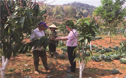 Huyện Mai Sơn (Sơn La): Cán bộ tín dụng chính sách tận tâm vì người nghèo