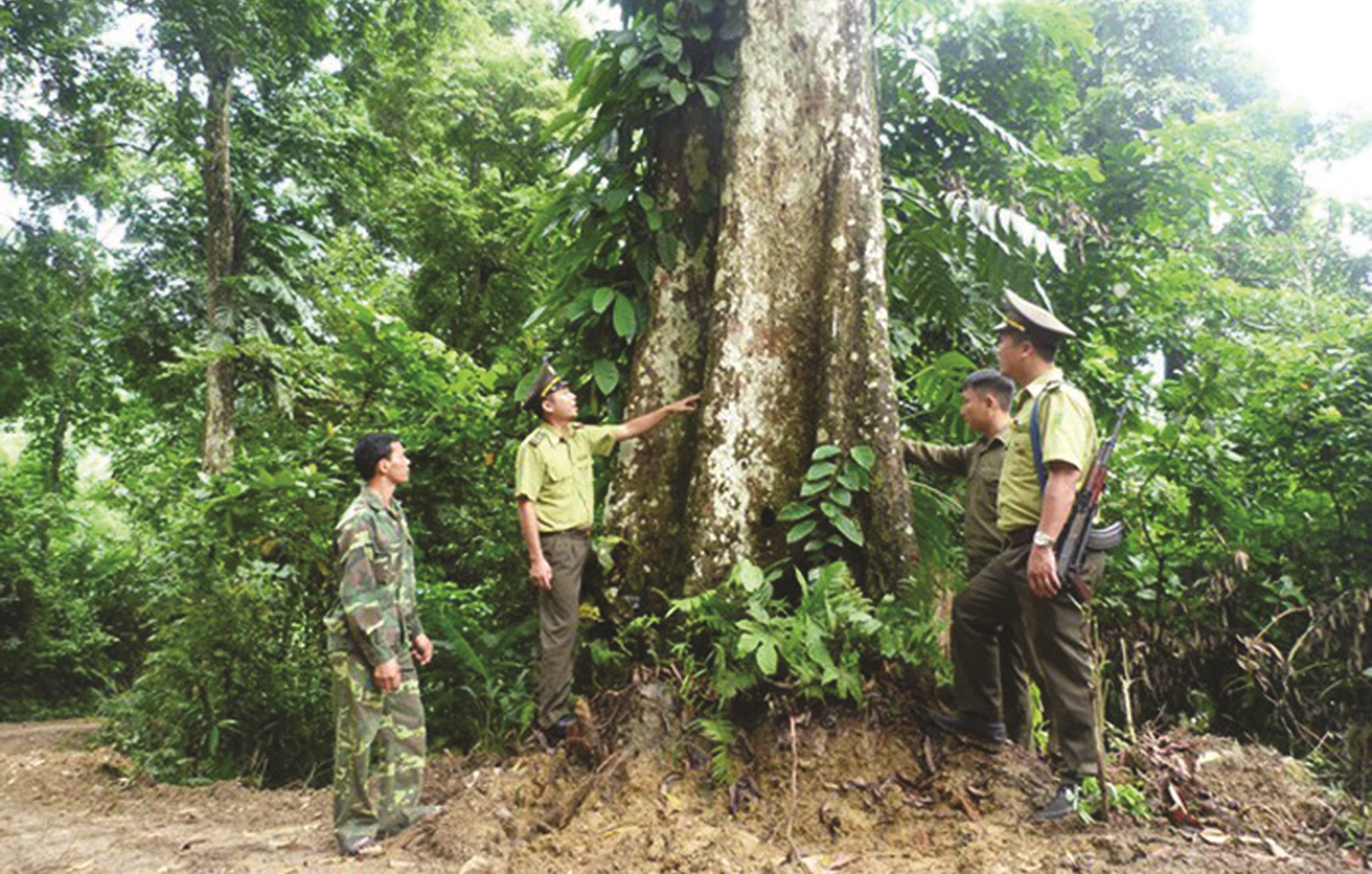 Rừng được giữ gìn xanh tốt nhờ lực lượng kiểm lâm có nhiều sáng kiến trong quản lý, bảo vệ
