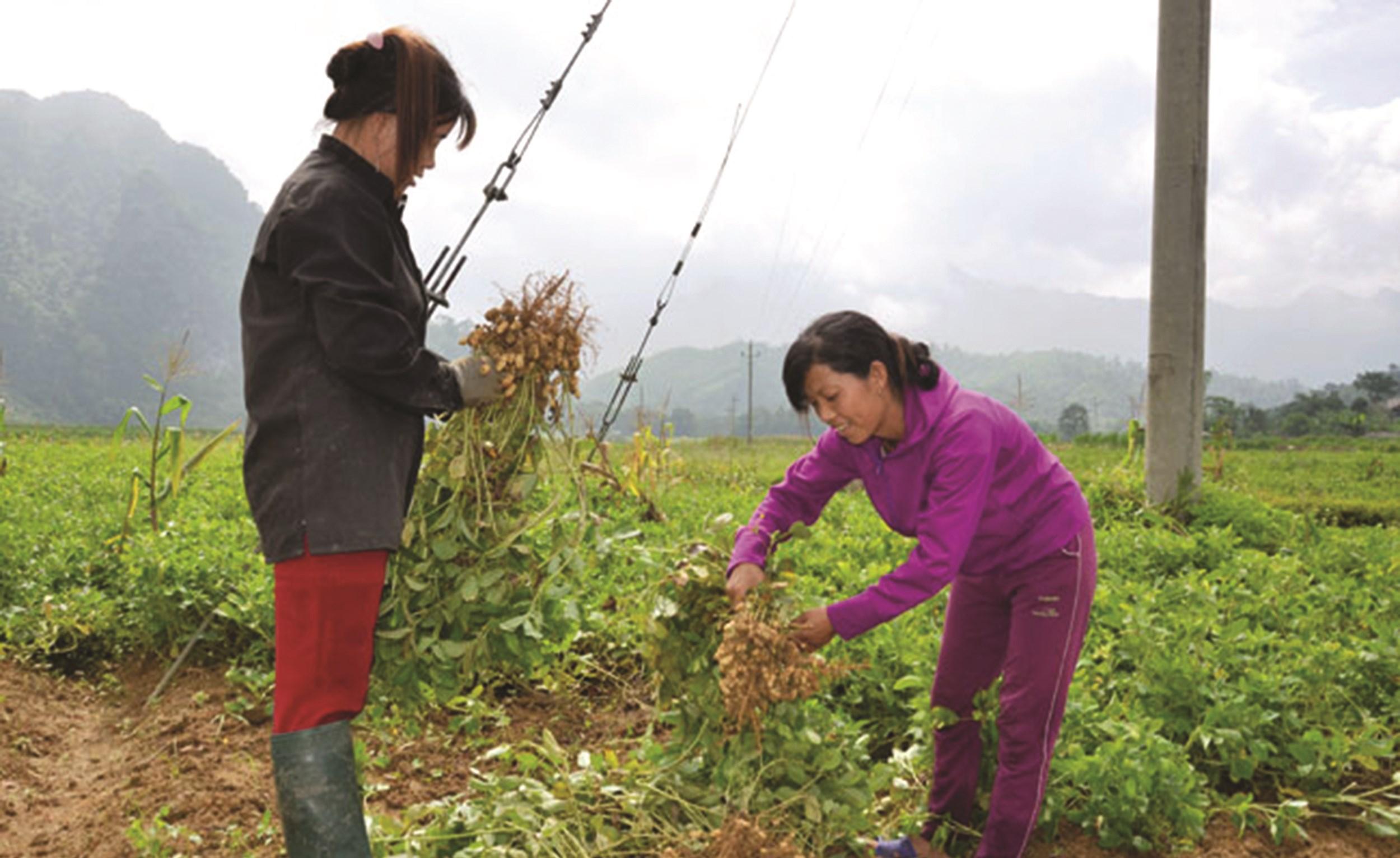 Chị Bàn Thị Lái (bên phải) dân tộc Dao, thôn Phiêng Tạ, xã Phúc Sơn (Chiêm Hóa) là một trong những hộ tự nguyện xin thoát nghèo đầu tiên của xã